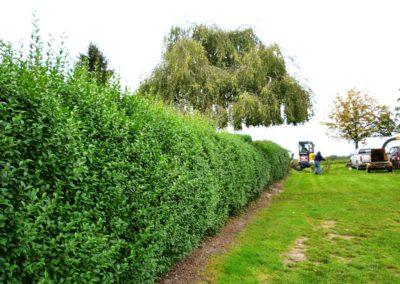 Aménagement jardin Mons