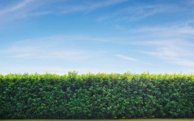 Quel brise-vue choisir pour profiter de votre jardin ?